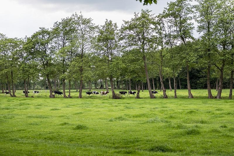 Het groninger landschap - coendersbosch