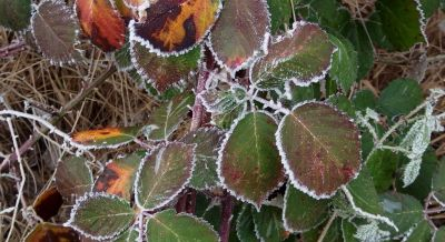 Natuur winter