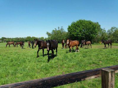 Paarden in coulisselandschap