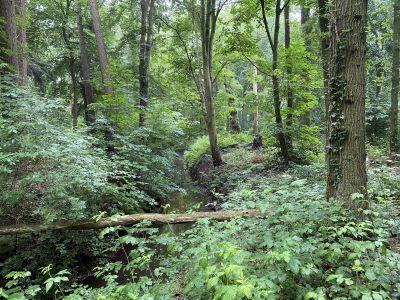 Het bos is een dag van jou